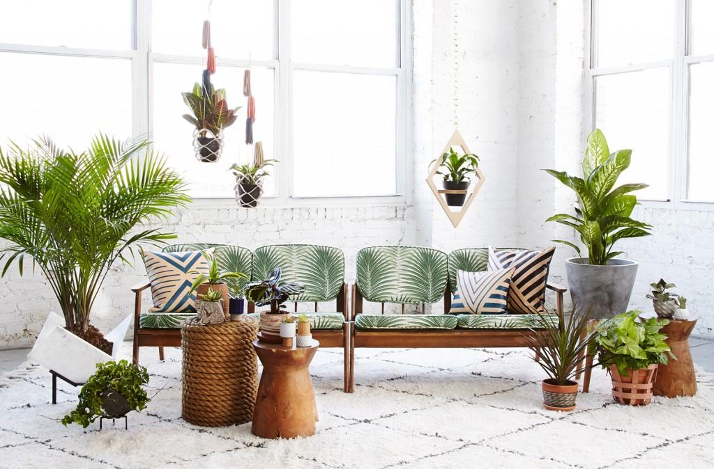 10 plantes d polluantes pour une maison saine meilleurs r gimes minceur comment perdre du. Black Bedroom Furniture Sets. Home Design Ideas