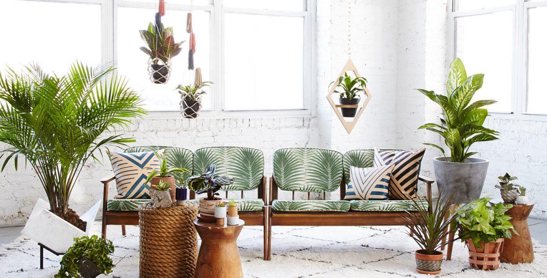 10 plantes d polluantes pour une maison saine meilleurs. Black Bedroom Furniture Sets. Home Design Ideas